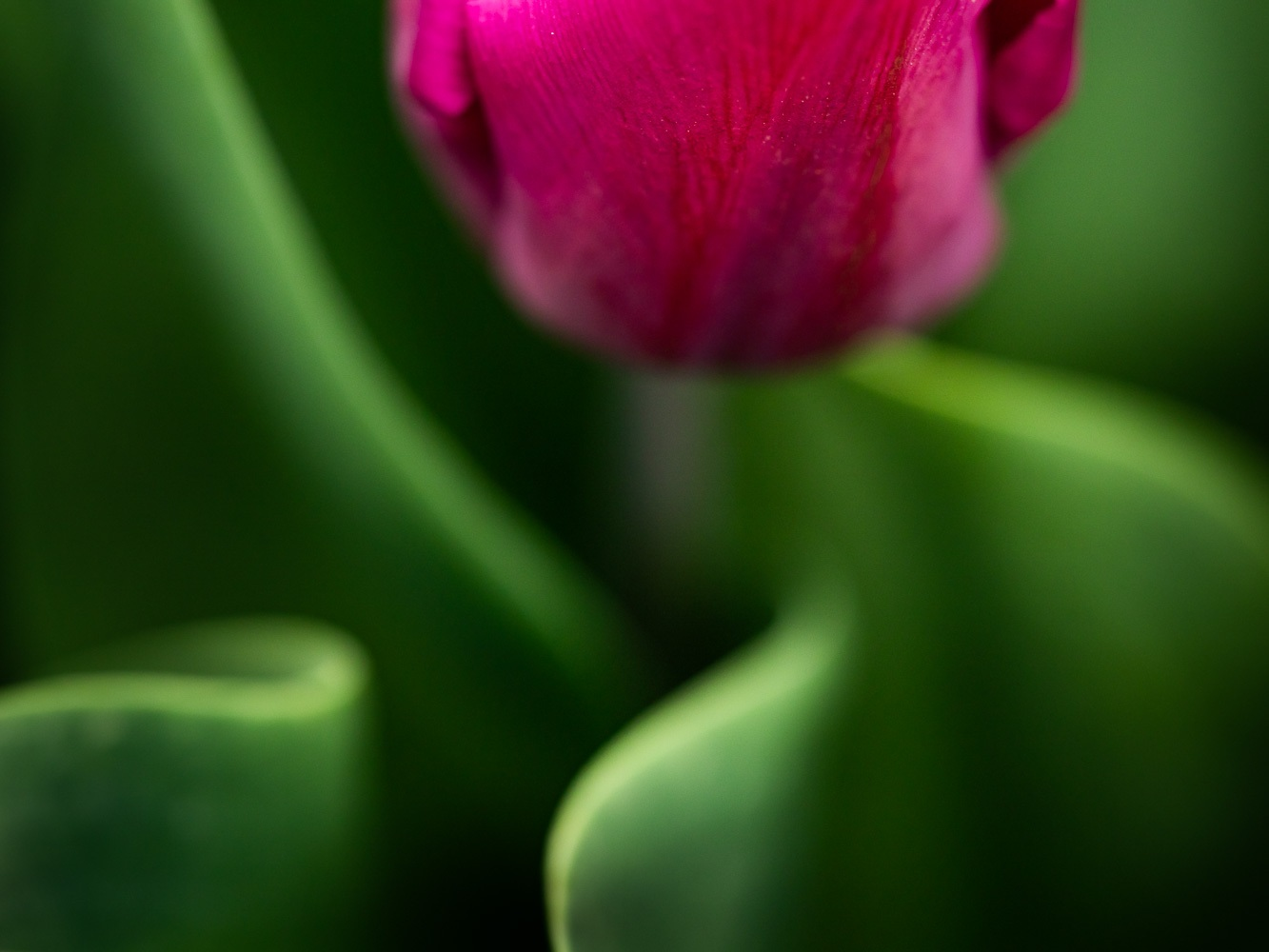 Photo-Art-Grace-Tulipe-06