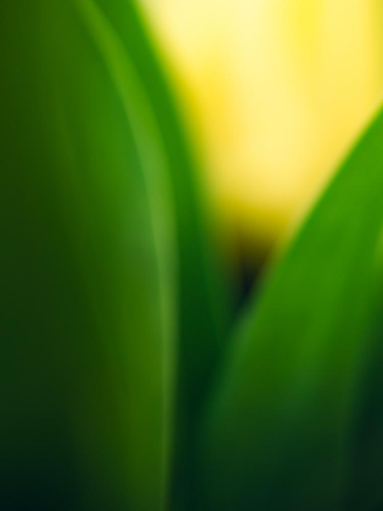 Photo-Art-Grace-Tulipe-08