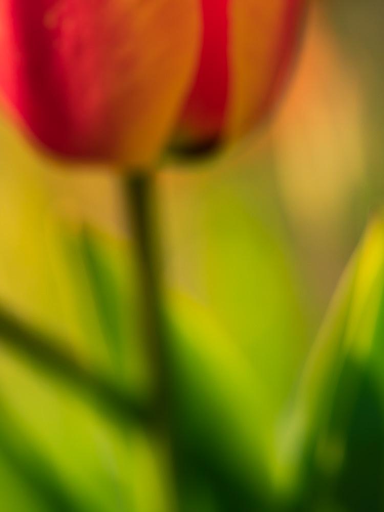 Photo-Art-Grace-Tulipe-11